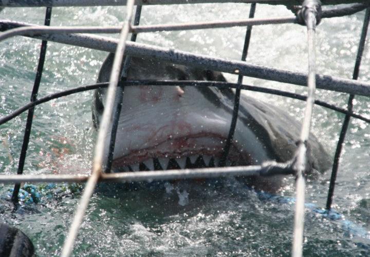 Shark Sanctuary Header